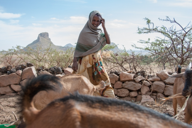 Abrehet lives in Tigray, northern Ethiopia where goats are particularly well adapted to the harsh conditions and are the perfect livestock to keep.