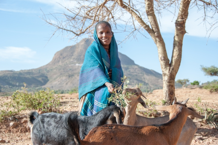 Farm Africa has taught Mulu how to take care of her goats and ensure they are healthy.
