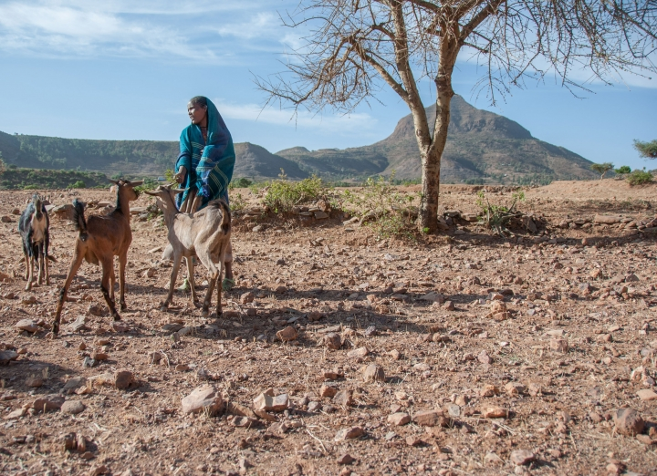 Mulu now earns an income from rearing goats.