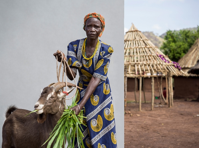 'These are the first bucks I have owned. I went with Farm Africa for training on how to look after them.'