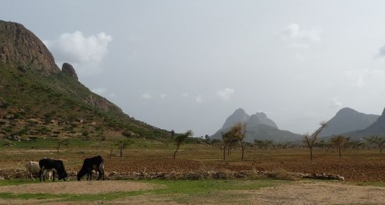 A Farm Africa day in Tigray