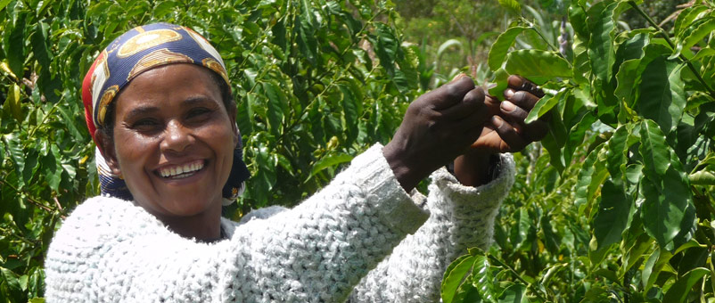Adnakeche tending to her coffee plants in Adancho, Ethiopia.