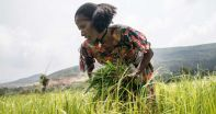 Farm Africa's strategy for transforming rural Africa