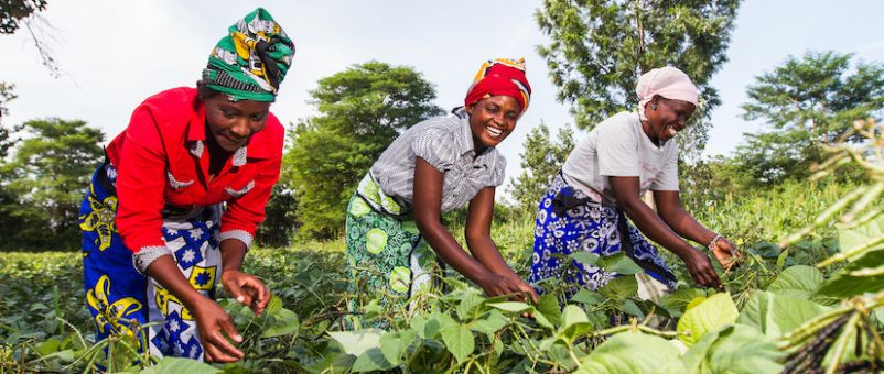 Image result for farming in africa