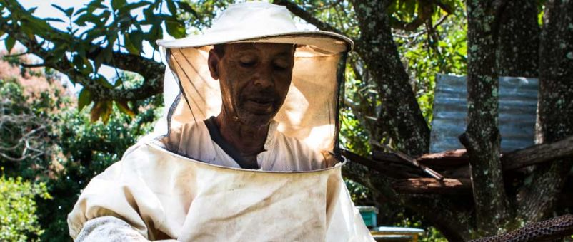 A beekeeper tends to his hive. Photo: Lisa Murray