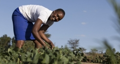 Could youth be the missing link to Kenyan food security?
