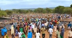 Making Markets Work for Smallholder Farmers