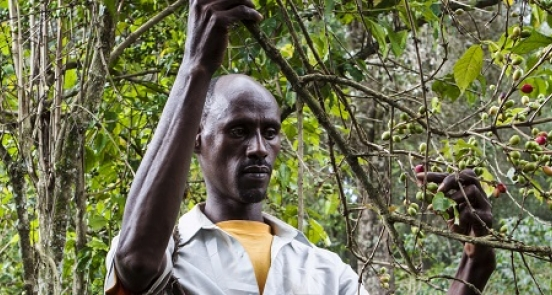 Agroecology in Action: Forest-Friendly Farming in Ethiopia