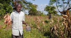 Potato power: how a switch from white to orange is tackling hidden hunger