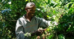 How Ethiopia's Arabica coffee is helping fight climate change