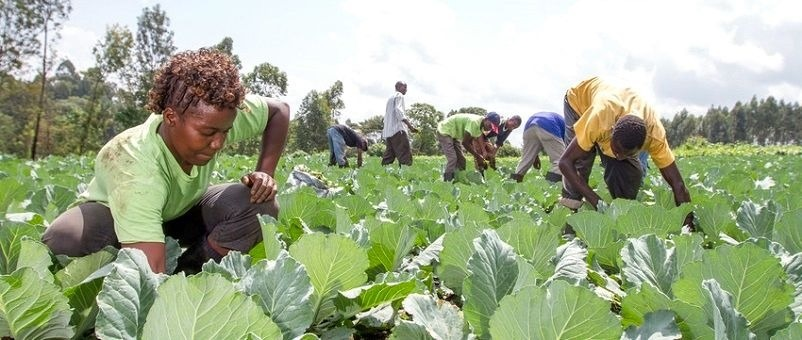 At least 70% of the population in eastern Africa works in agriculture.