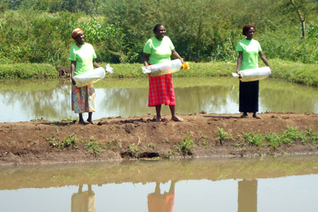 Women preparing to stock the fish pond with young fish
