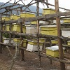 Buzzing with excitement about building beehives