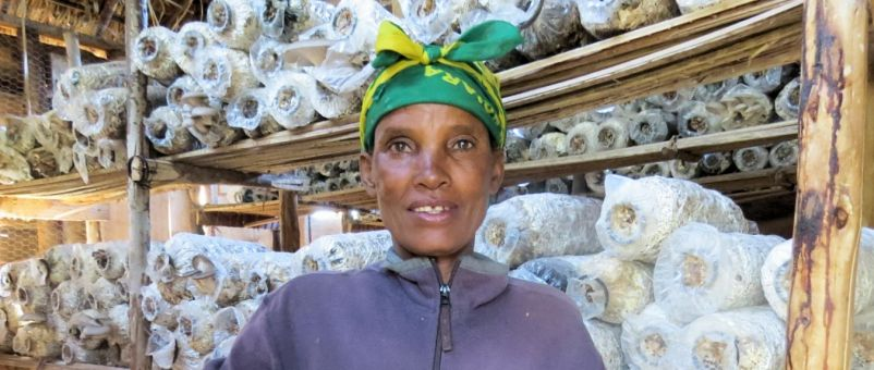 Mushrooms are now Magdalena's biggest source of income.