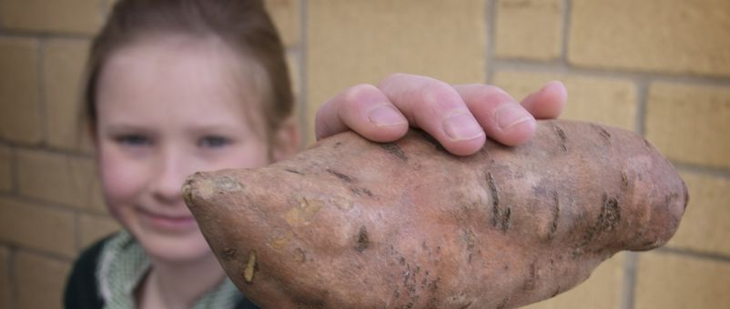 Sweet potatoes can help children do super things!