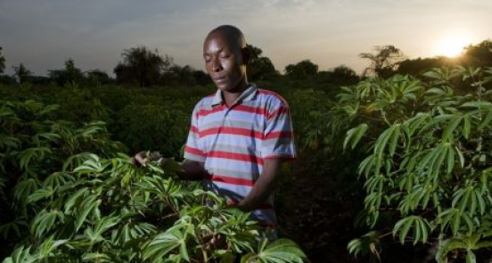 The view from Paris: what climate change means for smallholder farmers