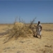 Increasing self-sufficiency for pastoralists in Afar, Ethiopia