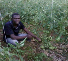 A student shows off his tomato plants
