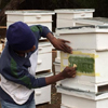 Sweet taste of success for Farm Africa's Bee Team
