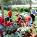 Planting begins in Dagoretti urban gardens