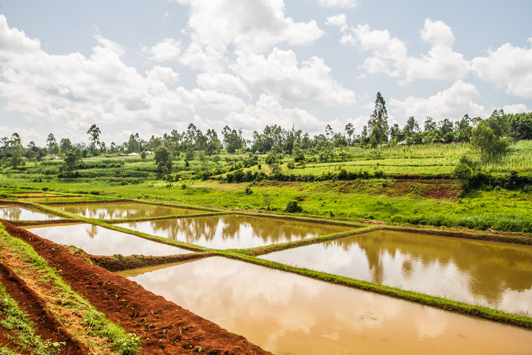 Farm africa expands fish farming in kenya latest news for Fish farming ponds