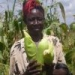 Ugandan farmers start to negotiate cross-border trade deals