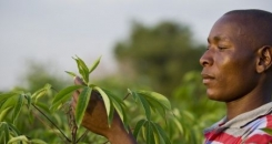 The three key ingredients necessary to achieve food security in Africa
