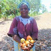 Revived cashew trees reviving Anna's income
