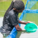 Pilot project boosted Kenyan fish farmers' production and adoption of high-quality inputs