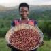 Empowering women in the coffee sector in Uganda