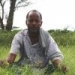 Postcard from Ethiopia: a green invasion