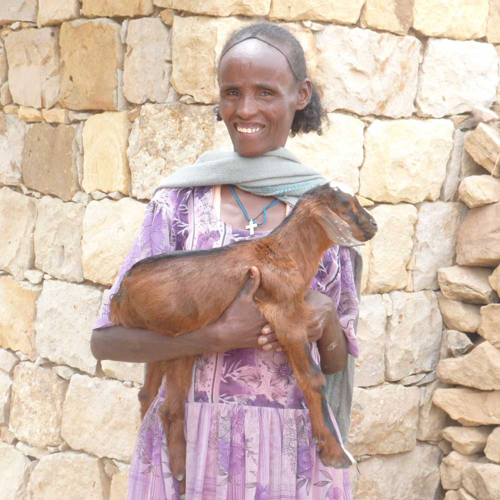 Ten reasons why we work with goats - Latest news from Farm Africa