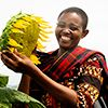 New project with UN Women will empower women in Tanzania's sunflower sector