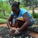 Youth groups are leading the way in Kenya's agricultural sector