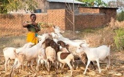 Farm Africa - Female farmer Friday from FoodTrade with goats