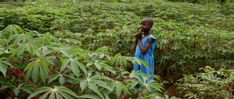 A child standing in a field of cassava in western Kenya.