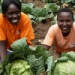 Farm Africa staff take up new Africa-UK agricultural scholarships