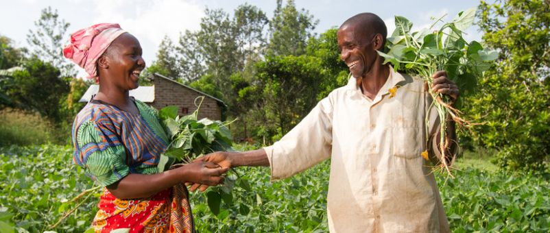 Pastor David Mutinda and his wife Kavutha Mutinda attend to their bean farm in Kamale, Kitui county, Kenya