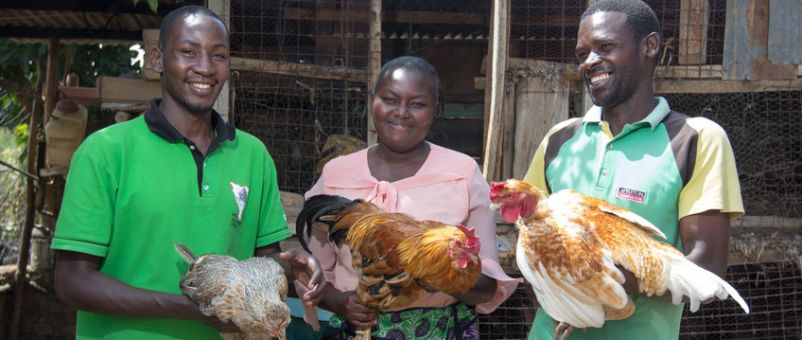 Small-scale poultry rearing is common in Kitui, Kenya. But farmers face challenges such as disease, and a lack of access to feed and drugs.
