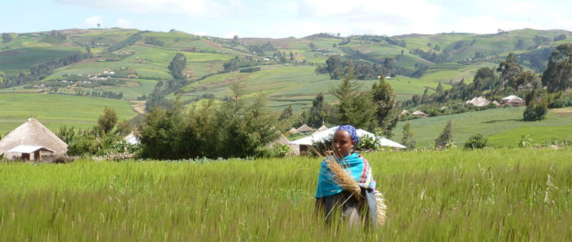 connecting barley farmers with business