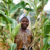 New Farm Africa project to help boost grain trade across eastern Africa