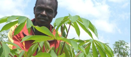 Counting on cassava in South Sudan