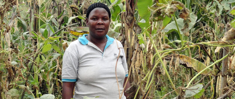 We helped women farmers produce more sugar beans through improved farming practices and better seeds.