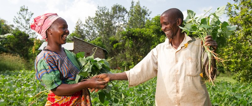 Pastor David Mutinda and his wife Kavutha Mutinda attend to their bean farm in Kitui county, Kenya