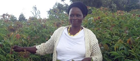 Cassava recipe for healthy harvests in Kenya