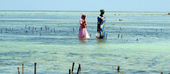 Postcard from Zanzibar - Changing lives in paradise