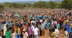 Making markets work for farmers