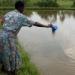 New film on fish farming in Kenya